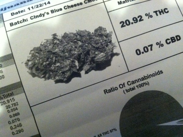 cindy's blue cheese profile test