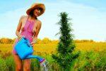 outdoor marijuana garden