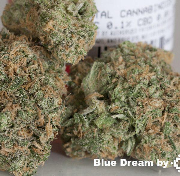 blue dream x stardawg