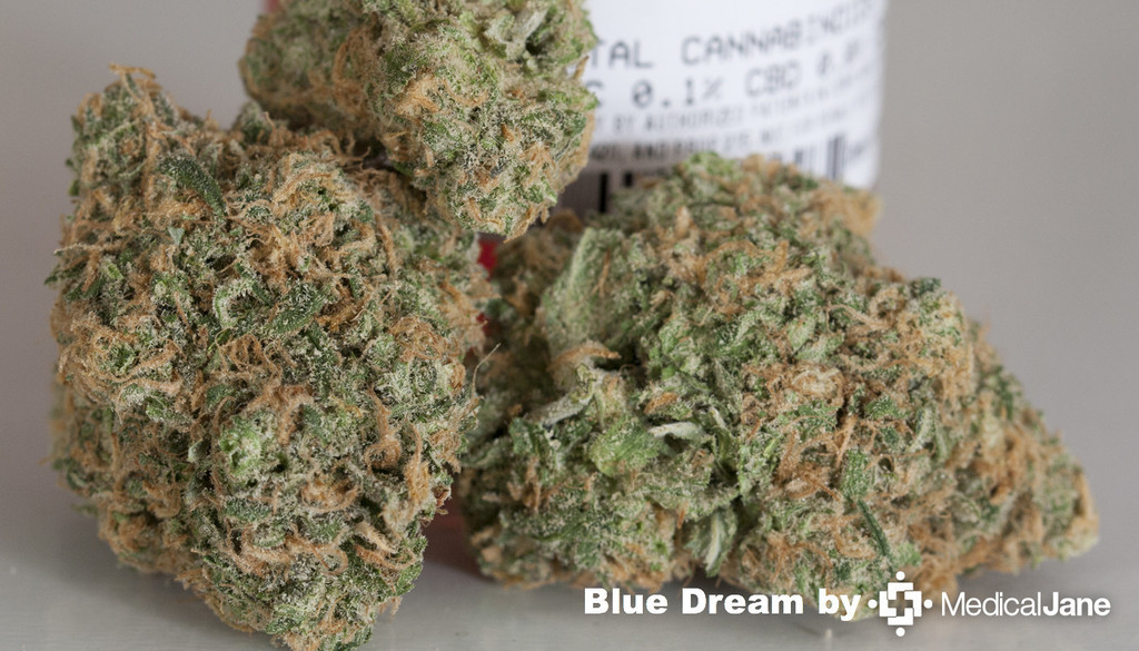 Dream Catcher Oregon Green Seed