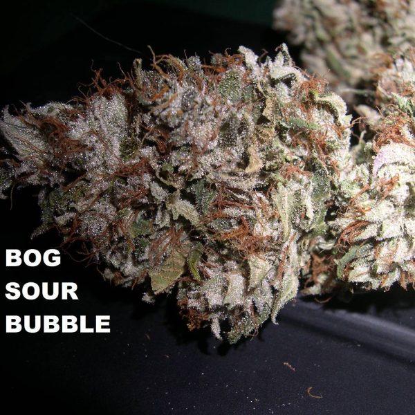 sour bubble dried bud