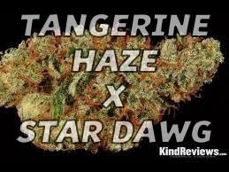 tangerine haze x stardawg