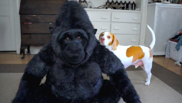gorilla and dog